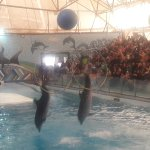 Milad Tower Dolphin Park