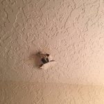 Animals digging into ceiling at night!