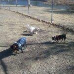 small dog area of Carole Wheeler Dog Park