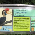 Photo de Bali Bird Walks