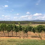 Φωτογραφία: Hunter Valley Wine Tasting Tours