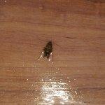Dead roach on the bathroom floor.