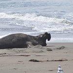 Just lying on beach