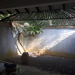 bathroom garden area, the ceiling bars keep the monkeys out