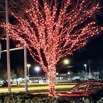 Lighted Tree outside the Theatre