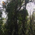 Kumarakom Bird Sanctuary Foto