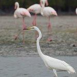 Egret & Flamingo