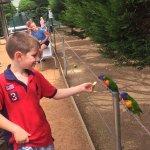 Foto Canberra Walk in Aviary