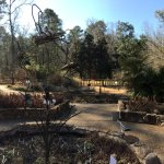 North Carolina Botanical Garden resmi