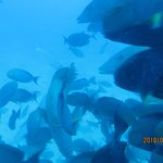 Photo de Whale Submarine Maldives