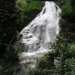 Waterfall in Shaw Park