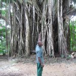 Our guide Percy pointing our this unusual tree with its many roots.