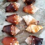 Shells pick up off beach