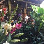 Photo of El Jardin de Celeste