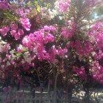 El Jardin de Playas照片