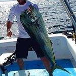 41 inch Mahi Mahi