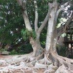 Marie Selby Botanical Gardens의 사진