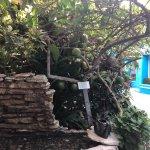 Photo of Villas Las Anclas