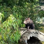 Foto de Phillip Island Wildlife Park