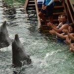 Photo of Delphinus Punta Cancun