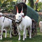 Photo de Prakruti Resort