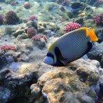 Snorkeling lagon - videos sur youtube page tsarabanjina
