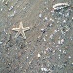 Found starfishes in the upcoming wave!