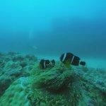 Foto de Atlantis International Diving Services