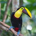 Dave & Dave's Costa Rica Nature Park Foto