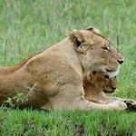 Foto de Serengeti Wild Camp