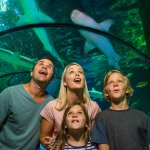 No trip to the Sunshine Coast is complete without visiting SEA LIFE Sunshine Coast.