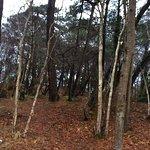 Wonderful acres of woodlands...