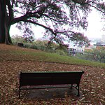A bench to admire the tree