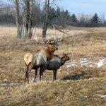 Elk viewing was nice!
