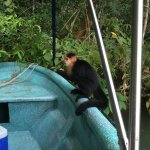 feeding monkeys peanuts during the Gatun lake fishing trip