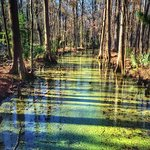 Swamp at Caw Caw Interpretive Center