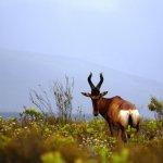Photo of Bontebok National Park