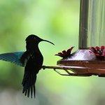 Visite des colibris à la cuisine