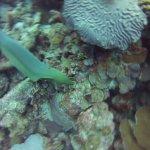Dive @ Klein - Green Moray Eel