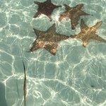 Photo of Sirena Beach