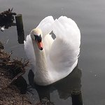 Slimbridge Wildlife Trust의 사진