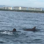 Our 12 year old swimming with a dolphin!