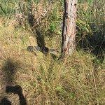Foto de DuPuis Reserve