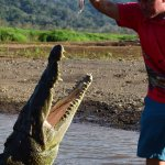 Crocodile Man Tours