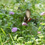 Butterflies and birds visit the lovely grounds