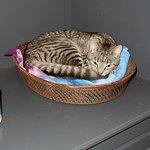 Hotel cat sleeping on shelf
