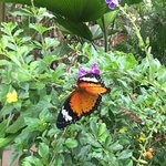 女王蝴蝶園照片