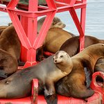 Sealions on a bouy
