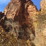 Zion's Main Canyon Foto
