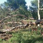 Zulu Nyala Heritage Safari Lodge의 사진